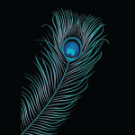 2392 - Peacock feather